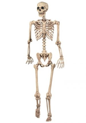 ESQUELETO POSSE LIFESIZE LIFESIZE POSABLE SKELETON