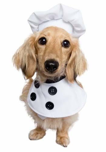 Fantasia de Cachorro Chef – Chef Dog Costume