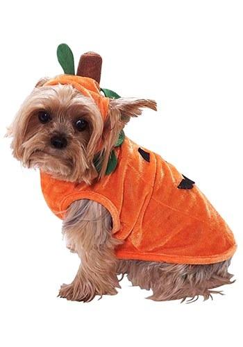 Fantasia de abóbora para cães – Pumpkin Costume for Dogs
