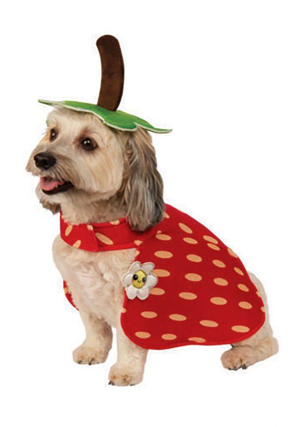 Fantasia de cachorro com morango- Yummy Strawberry Dog Costume