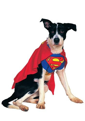 Fantasia de cachorro superman – Superman Dog Costume